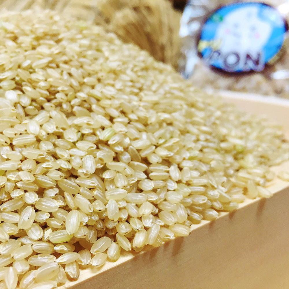 ドリームファームのコシヒカリ 玄米