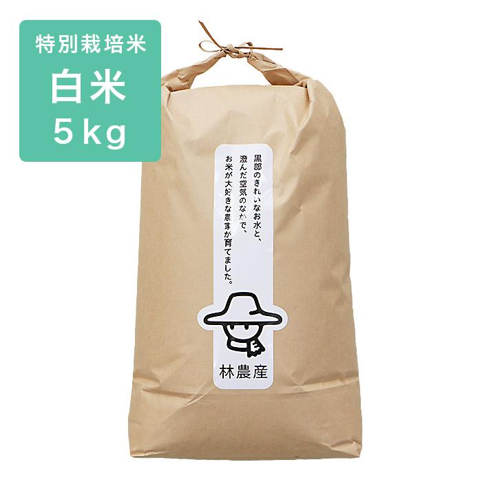 白米特別コシヒカリ5kg
